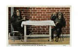 Monkeys at Washington Park Zoo Giclee Print