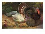 Postcard of Turkeys Giclee Print by  Lake County Museum