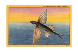Flying Fish Giclee Print