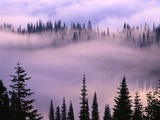 Fog Lifting over Trees Photographic Print by Darrell Gulin