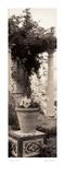 Jardin Botanico Prints by Alan Blaustein