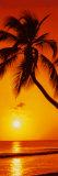 Palmier, coucher de soleil Affiche
