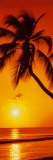 Palme – Sonnenuntergang Kunstdruck