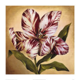 Stripey Tulip I Posters by Galley 