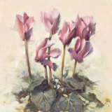 Cyclamen Floral Print by Paul Mathenia