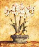 Amaryllis blanc Affiches par Tina Chaden