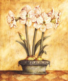 White Amaryllis Posters by Tina Chaden