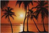 Caribean Sunset Posters