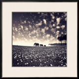 Manada Framed Photographic Print by Luis Beltran