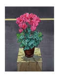 Still Life Cyclamen Giclee Print by Christopher Ryland