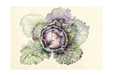 Cabbage from the Market Giclee Print by Alison Cooper