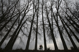 Girls Walk Beneath a Row of Parched Tress on a Winter Day in the Outskirts of Jammu Photographic Print by Mukesh Gupta