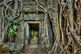 Ancient Stone Door and Tree Roots, Ta Prohm Temple, Angkor, Camb Photographic Print by  f9photos
