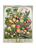 July, from 'Twelve Months of Fruits' Giclee Print by Pieter Casteels