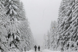 People Walk under Heavy Snowfall Near the Eastern German Town of Altenberg Photographic Print by David W Cerny