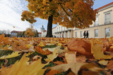 Autumn Leaves Lay on the Ground at Charlottenburg Castle's Park in Berlin Photographic Print by Fabrizio Bensch