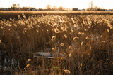 A Cast Iron Bathtub Sits Among Reeds after Being Deposited Photographic Print by Lucas Jackson