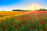 Poppies Field at Sunset Photographic Print by  Kavita