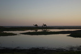 Men Walk with Camels During Sunset by the Sea in Karachi Photographic Print by Athar Hussain