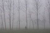 A Man Rides a Bicycle Amid Heavy Fog During Early Morning on the Outskirts of Chandigarh Photographic Print by Ajay Verma