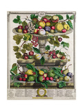 June, from 'Twelve Months of Fruits' Giclee Print by Pieter Casteels