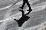 An Office Worker Crosses Kent Street in Central Sydney Fotodruck von Daniel Munoz