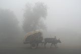 A Man Carries Cow Dung on His Bullock Cart to Sell Photographic Print by K.K. Arora