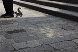 A Squirrel Smells the Feet of a Man in Mexico City Photographic Print by Edgard Garrido