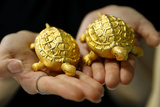 An Employee Holds Replicas of Turtles Made of Gold During a Photo Opportunity Photographic Print by Truth Leem