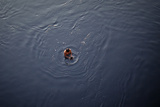 A Man Looks for Coins Thrown by Devotees in the Arabian Sea, in Mumbai Photographic Print by Danish Siddiqui