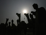 A Man Is Silhouetted Along with His Camels after They Were Brought to an Animal Market to Be Sold Photographic Print by Mohsin Raza