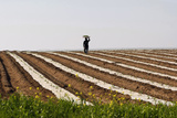 A Thai Labourer Works in a Watermelon Field Near the Southern Israeli Town of Sderot Photographic Print by Baz Ratner