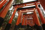A Man Walks Through Torii Gates at Fushimi Inari Taisha in Kyoto, Western Japan Photographic Print by Yuriko Nakao