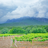 Vineyards Photographic Print by  tycoon101