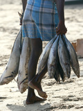 A Fisherman Carries Fish at the Beach in Trincomalee Photographic Print by Stringer Sri Lanka