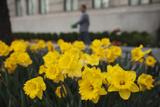 Lucas Jackson - Flowers Bloom in a Street Planter Near Central Park During a Warm Day in New York - Fotografik Baskı