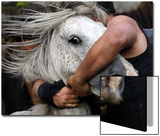 A Reveller Tries to Hold on to a Wild Horse During the -Rapa Das Bestas- Traditional Event Poster by Miguel Vidal