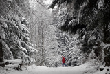 A Man Walks in the Snow on a Cold Winter Day in the Wood of Chalet-A-Gobet in Lausanne Photographic Print by Denis Balibouse