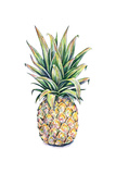 Pineapple on a White Background. Watercolor Illustration Affiches par  MargaritaSh