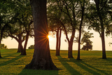 HDR Backlit Trees. Sun Flare Bursting through the Silhouettes Photographic Print by  ericurquhart