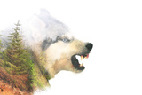 Angry Dog. Double Exposure Photographic Print by  byrdyak