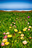 Coastal Wildflowers Photographic Print by  garytog
