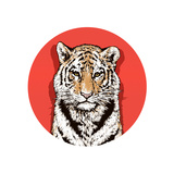 Graphic Color Drawing of a Bengal Tiger. Wildlife. Big Cat Prints by  MargaritaSh