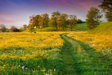 Colorful Summer Sunrise in the Countryside with Road Photographic Print by  jojjik