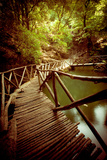 Wooden Footbridge through Forest Photographic Print by  EvanTravels
