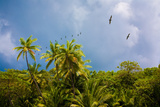 Costa Rica Rainforest Photographic Print by  EvanTravels