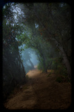 Big Sur Redwood Forest Misty Trail Photographic Print by  EvanTravels