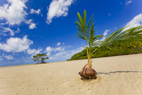 EvanTravels - Sprouting Coconut Fotografická reprodukce