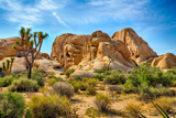 Joshua Tree National Park Photographic Print by  garytog