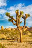 Parque Nacional Joshua Tree Lámina fotográfica por  garytog